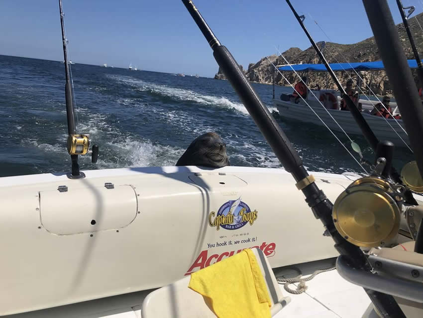 Integrity Roofing & Painting Fishing trip with seal